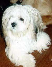 Philadelphia Philadelphia County 09 17 10 Lost Dog Bella