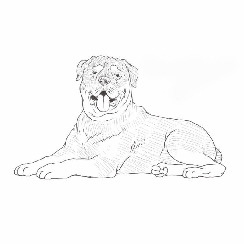 Rottweiler Drawing Dog Breeds List Dog Sketch Dog Breeds List Dog Breeds