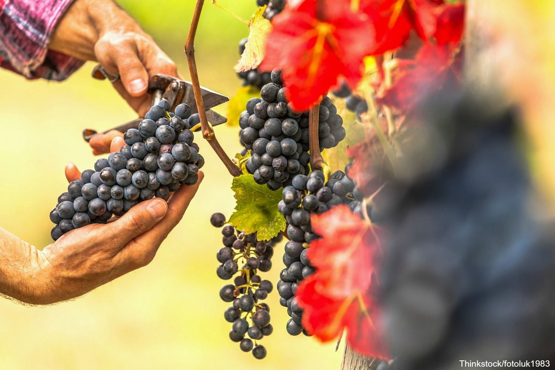 Try Some of the Best Local Wines at Burntshirt Vineyards | The Esmeralda Inn & Restaurant