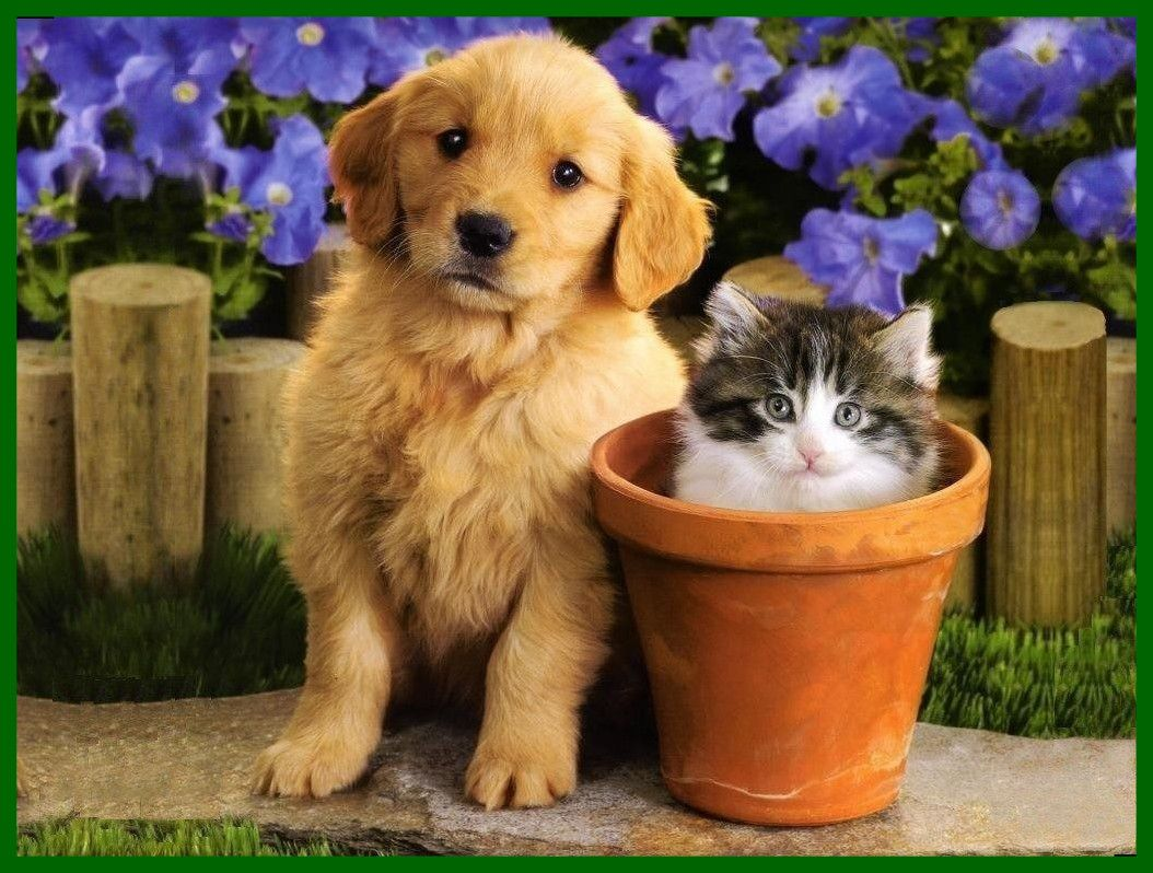 Kitten And Puppy Wallpapers Free Puppy Wallpaper Kittens And Puppies Animals