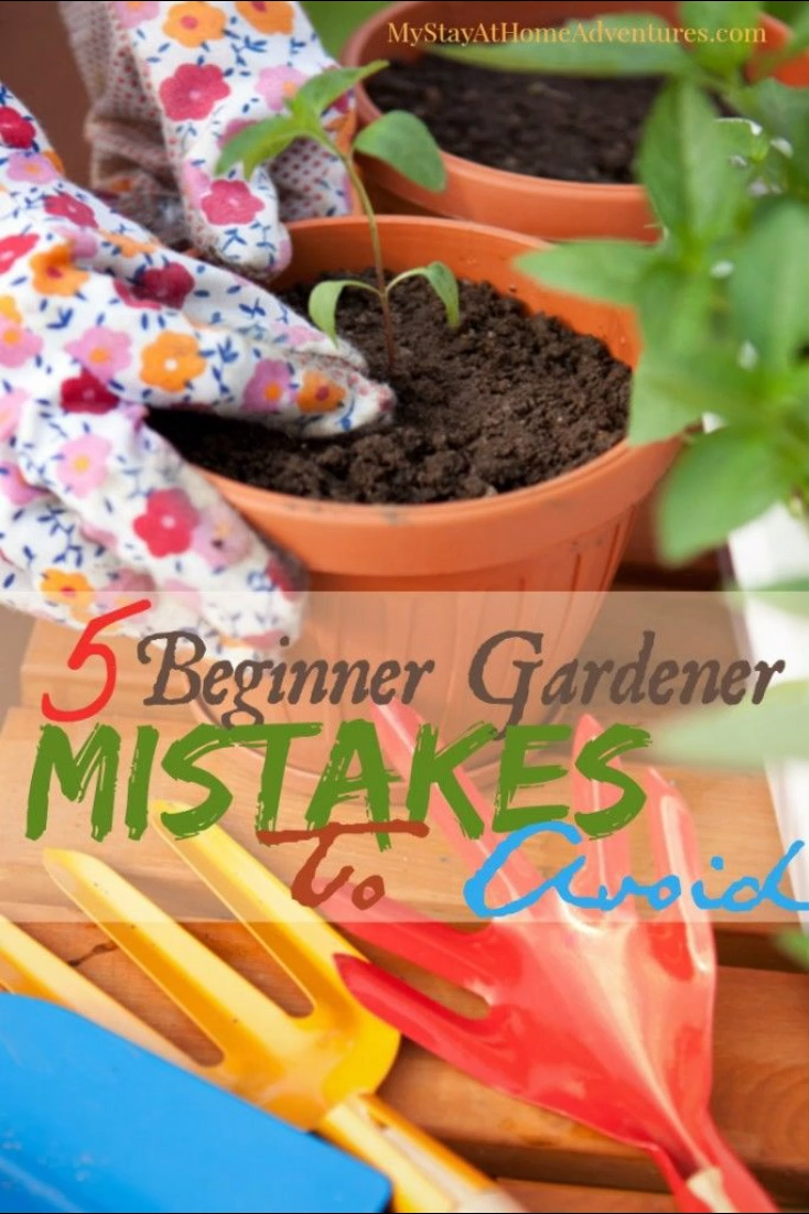 Photo of 5 Gardening Mistakes To Avoid This Season
