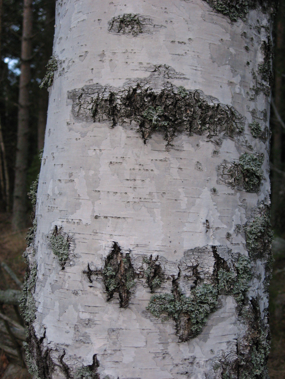 Bild från https://hwtextil.files.wordpress.com/2011/01/julen2007-0741.jpg.