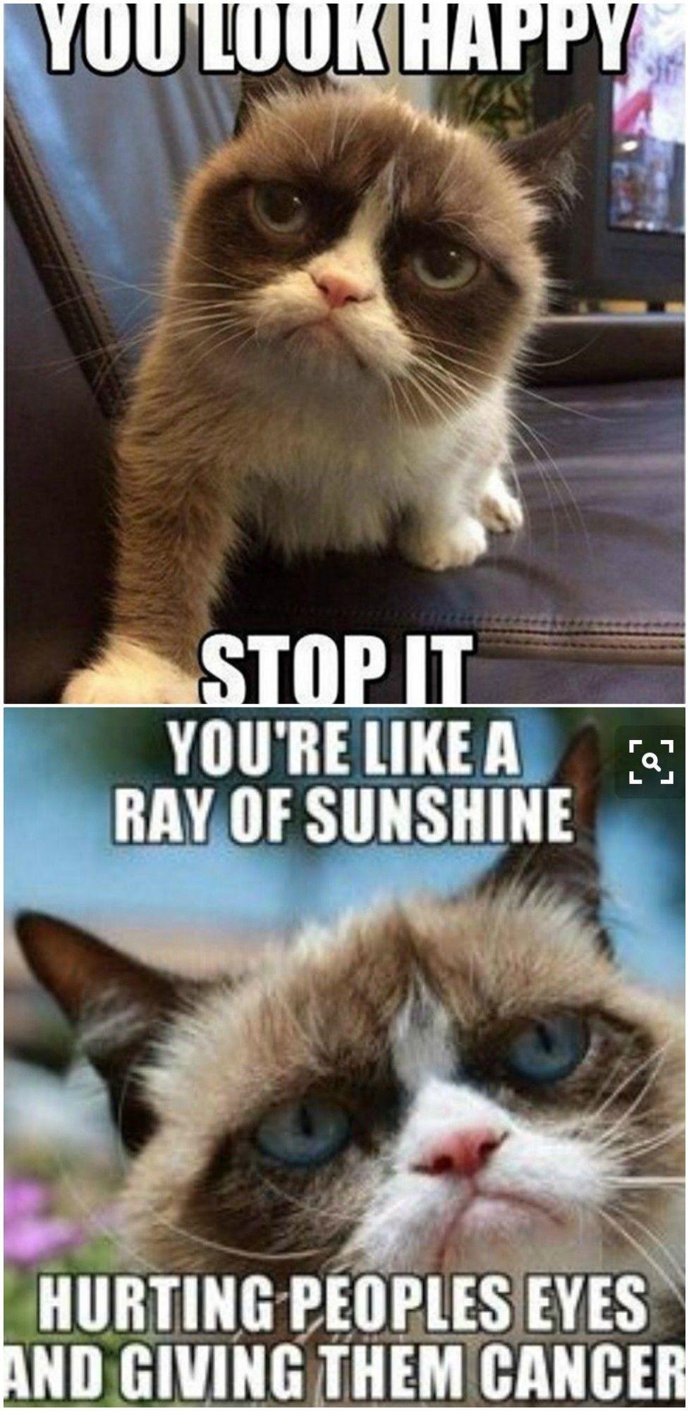 Top 20 Grumpy Cat Memes School Funny Grumpy Cat Memes Grumpy Cat Quotes Grumpy Cat Humor