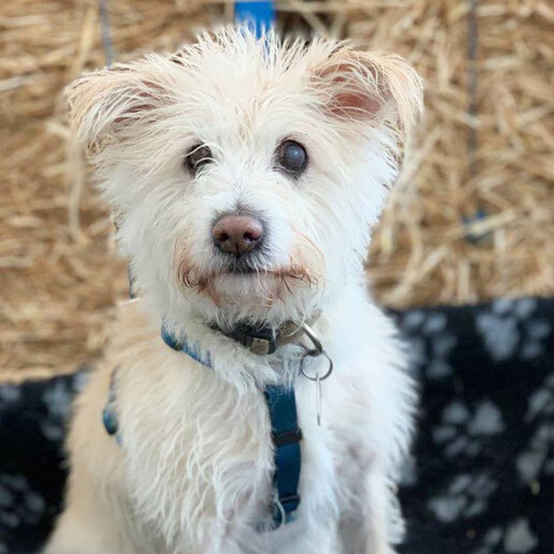 Pin Auf Hund Adoptieren Aus Dem Tierheim