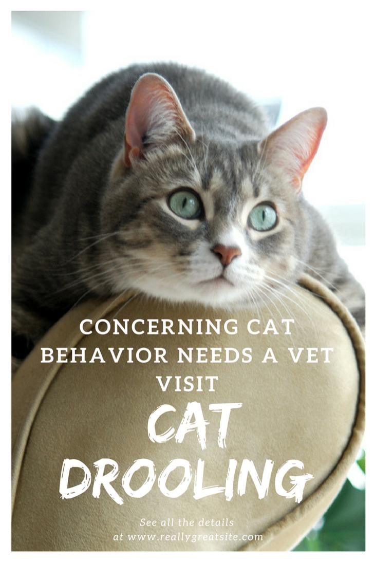 Cat Drooling Concerning Cat Behavior Needs a Vet Visit