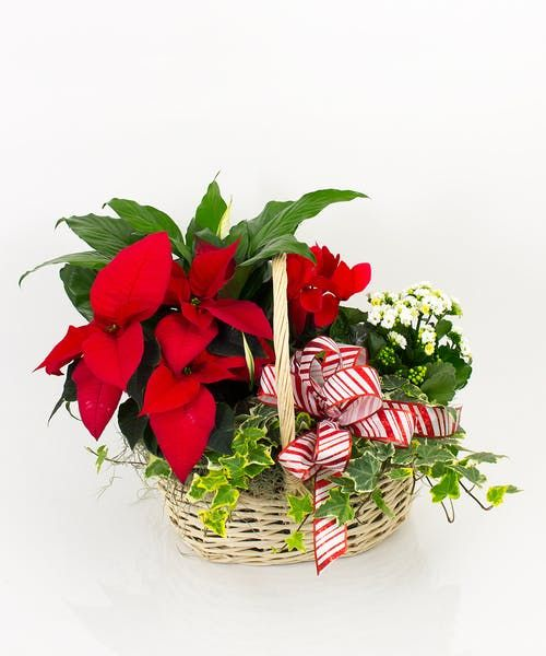 Traditional Winter Blooming Garden Plant Basket Winter Plants Christmas Flowers