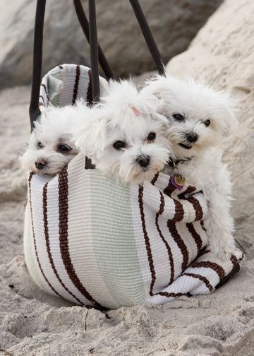 Pin By Frances Jones On Doggies Love Dogs Cute Dogs Cute Puppies