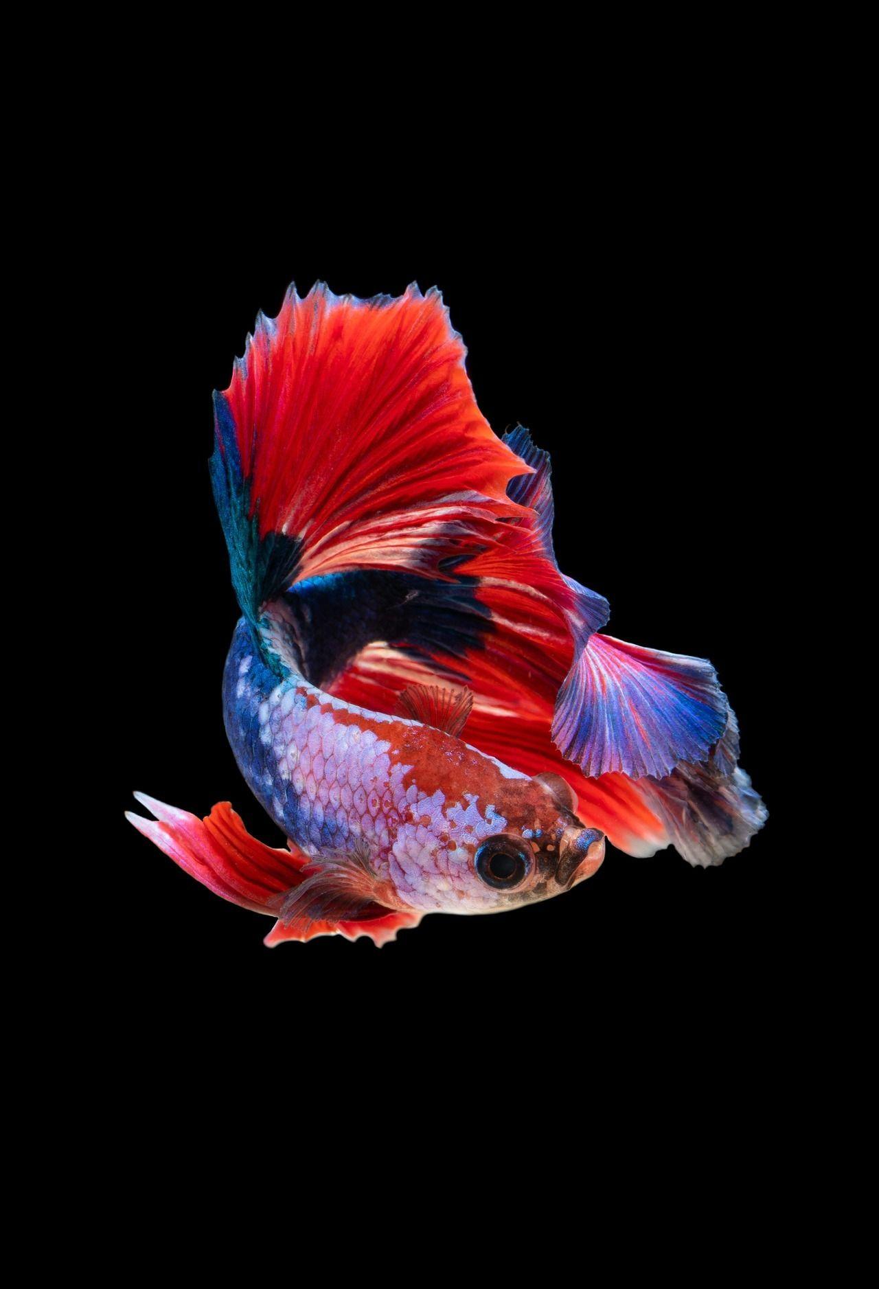 Phantastyaophe Photos Of Fish Animal Wallpaper Fish Wallpaper