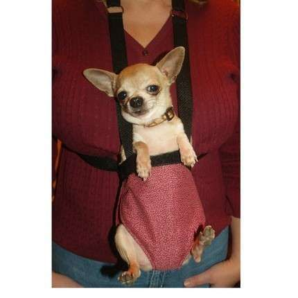 Dog Baby Carriers And Slings Baby Dogs Dogs Chihuahua Love
