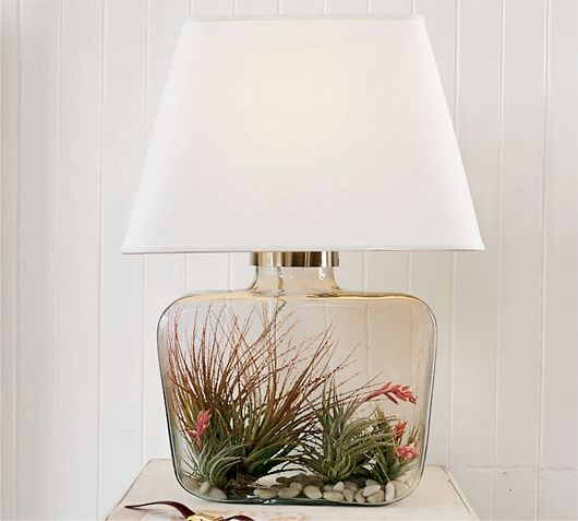 Air Plants Inside Glass Lamp There Would Need To Be An