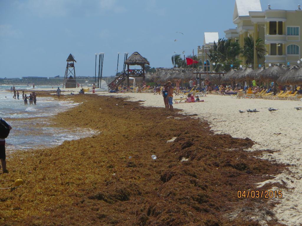 Review Of Iberostar Paraiso Beach Playa