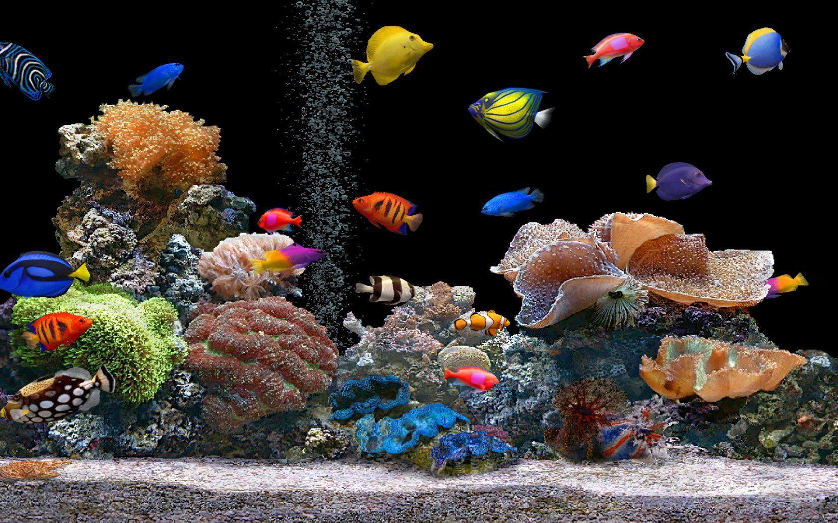 fond d'ecran anime aquarium gratuit telecharger