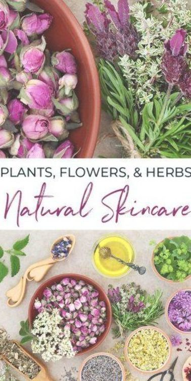 An introduction to herbs for skincare including plants  flowers to use for diff An introduction to herbs for skincare including plants  flowers to use for diff