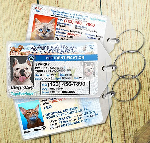 Give your pet the license to be found. - http://noveltystreet.com/item/17142/