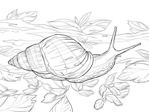 Giant African Land Snail Coloring page | Tegninger: Pastel Pencils ...