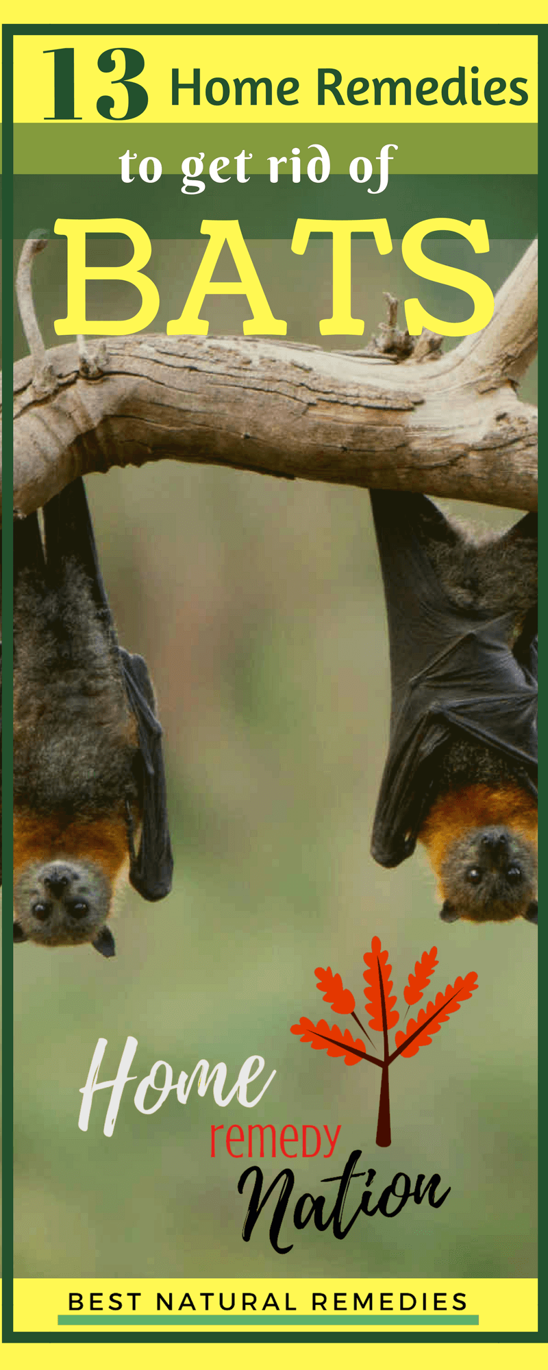 How to Get Rid of Bats. If bats have taken up residence in