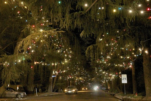 Christmas Tree Lane Christmas Things To Do California Christmas Christmas In La