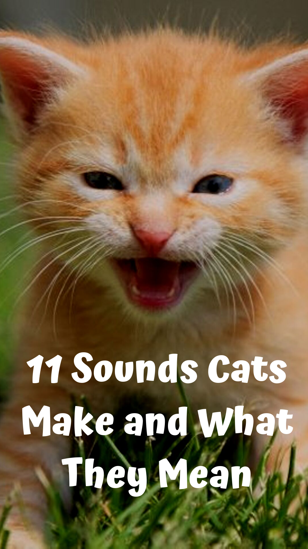 11 Sounds Cats Make and What They Mean Cute cats, dogs