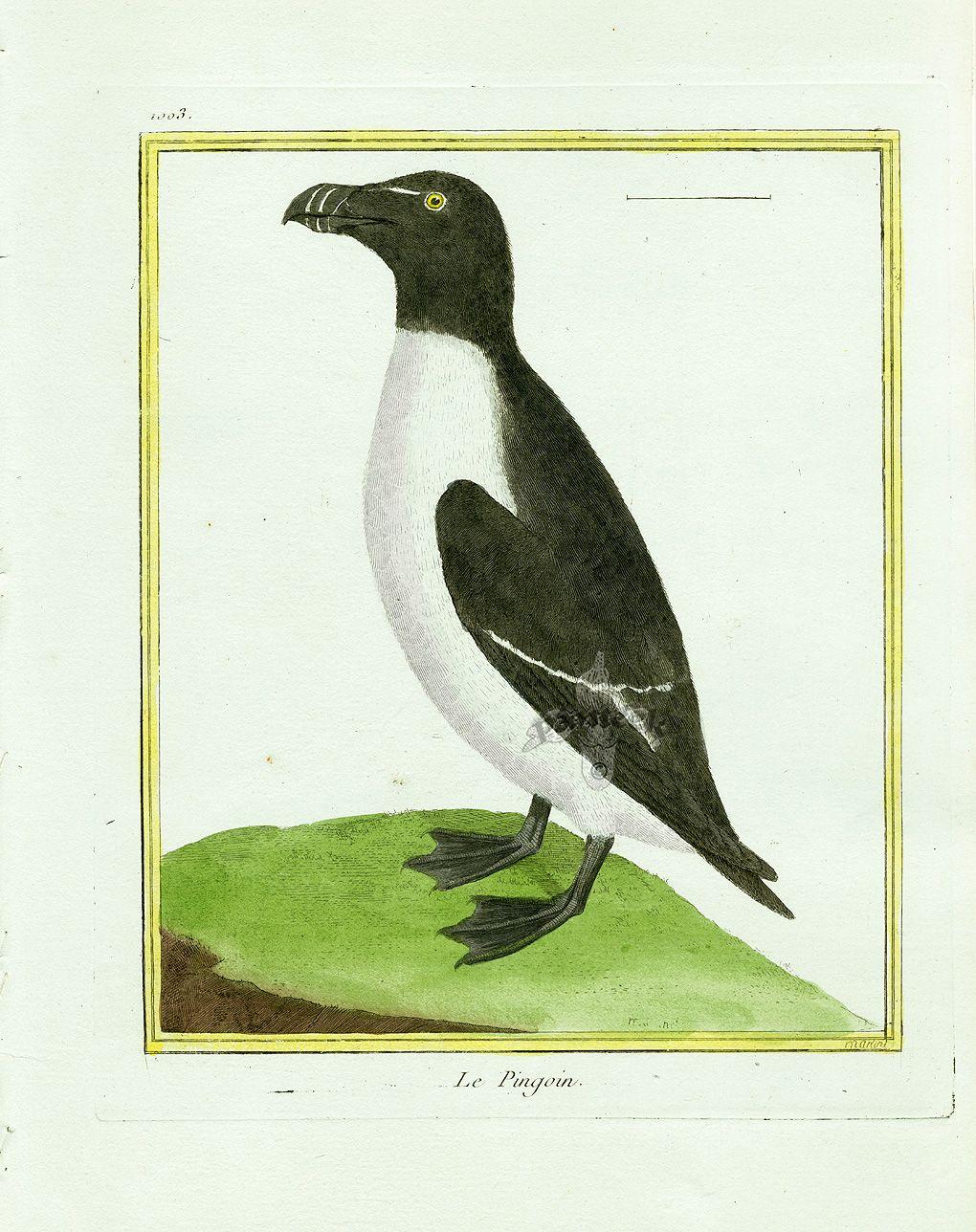 Martinet c1770's: Pingouin Razorbill