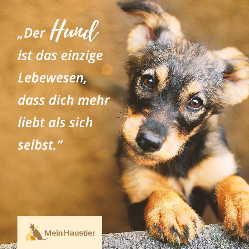 Photo of Hunde sind so selbstlose und liebenswerte Tiere! #wahreworte #meinhaustier #hund…