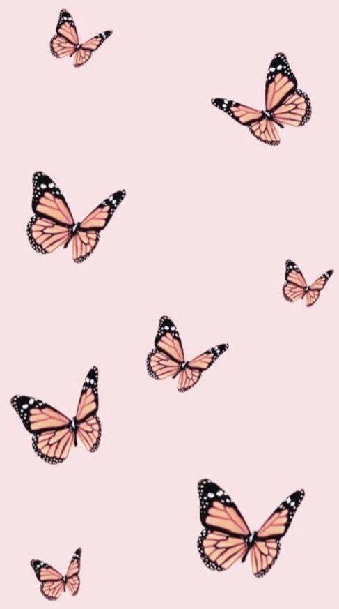Babochki Butterflies Simple Iphone Wallpaper Butterfly Wallpaper Iphone Iphone Wallpaper Vsco