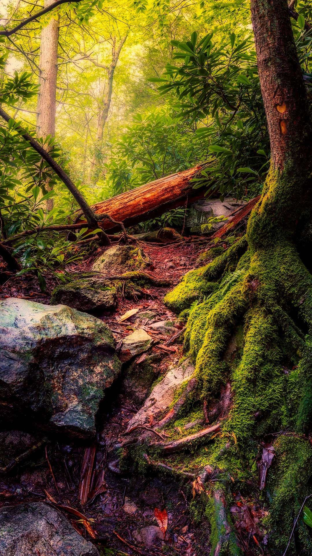 20 Forest Wallpaper Phone Backgrounds Hd Image For Free Download Cutewallpaperbackgrounds Wonderful Forest Wallpaper Green Nature Wallpaper Phone Backgrounds Forest nature phone wallpaper