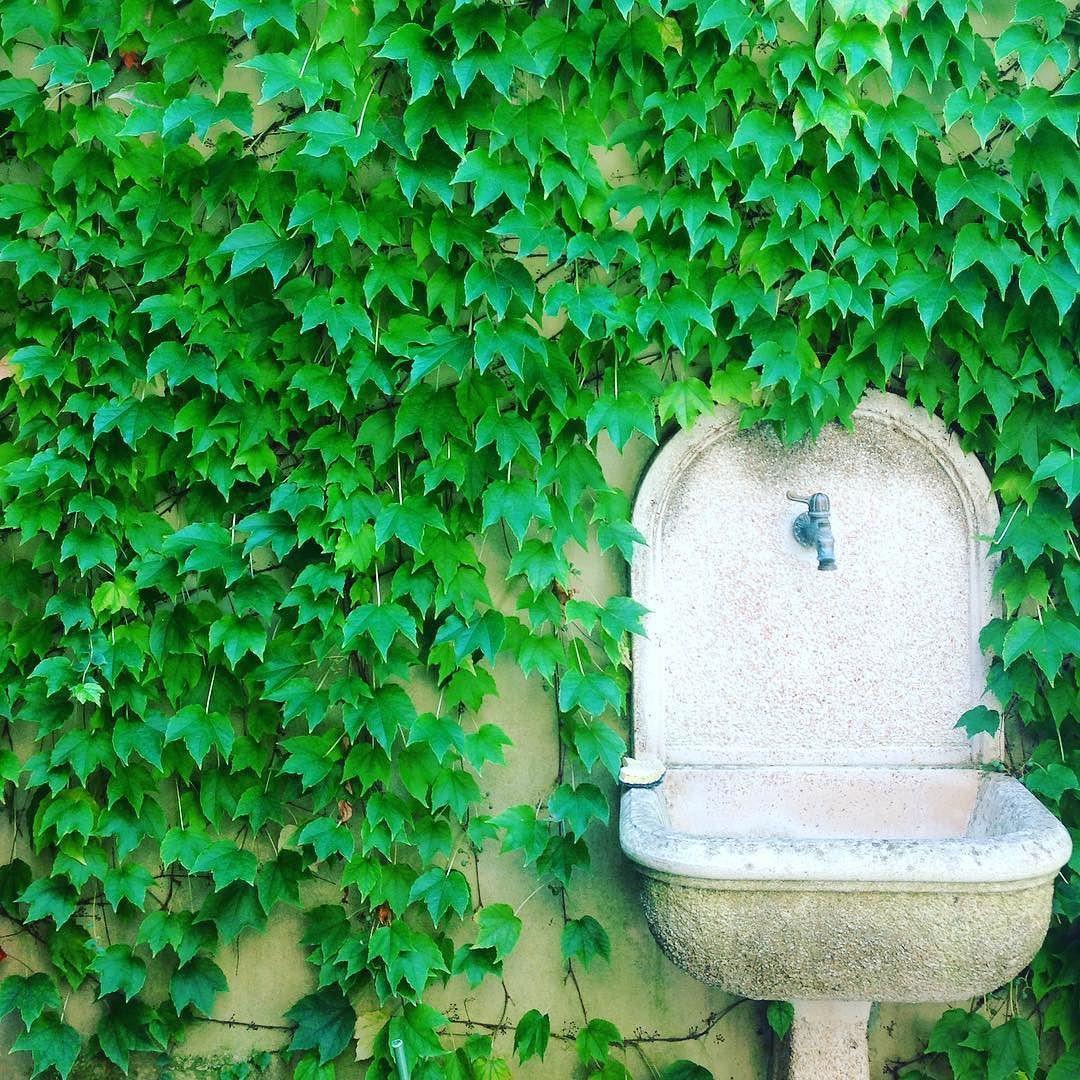 La fontanella che trattiene l'estate. my shot  #giardino #garden #fontana #fountain #acqua #water #estate #summer #green #verde #instalike #instafun #photo #photooftheday #igers #igerslivorno #igerstoscana #livorno #toscana #tuscany