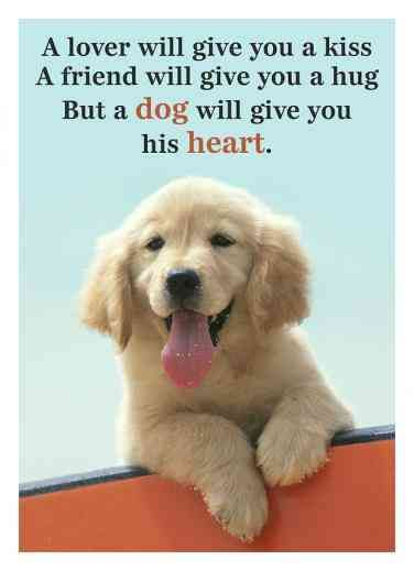 Latest Funny Pets 50 Funny Memes & Quotes Everyone Who Loves Their Pet Can Relate To 50 Funny Pet Memes & Pet Quotes For National Love Your Pet Day | YourTango 3