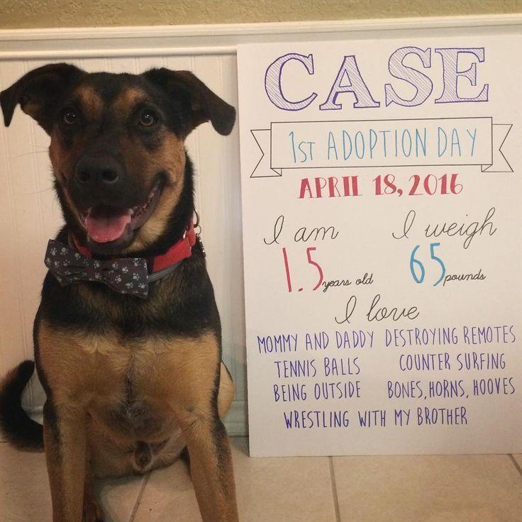 12 cute dog adoption announcement ideas dog adoption