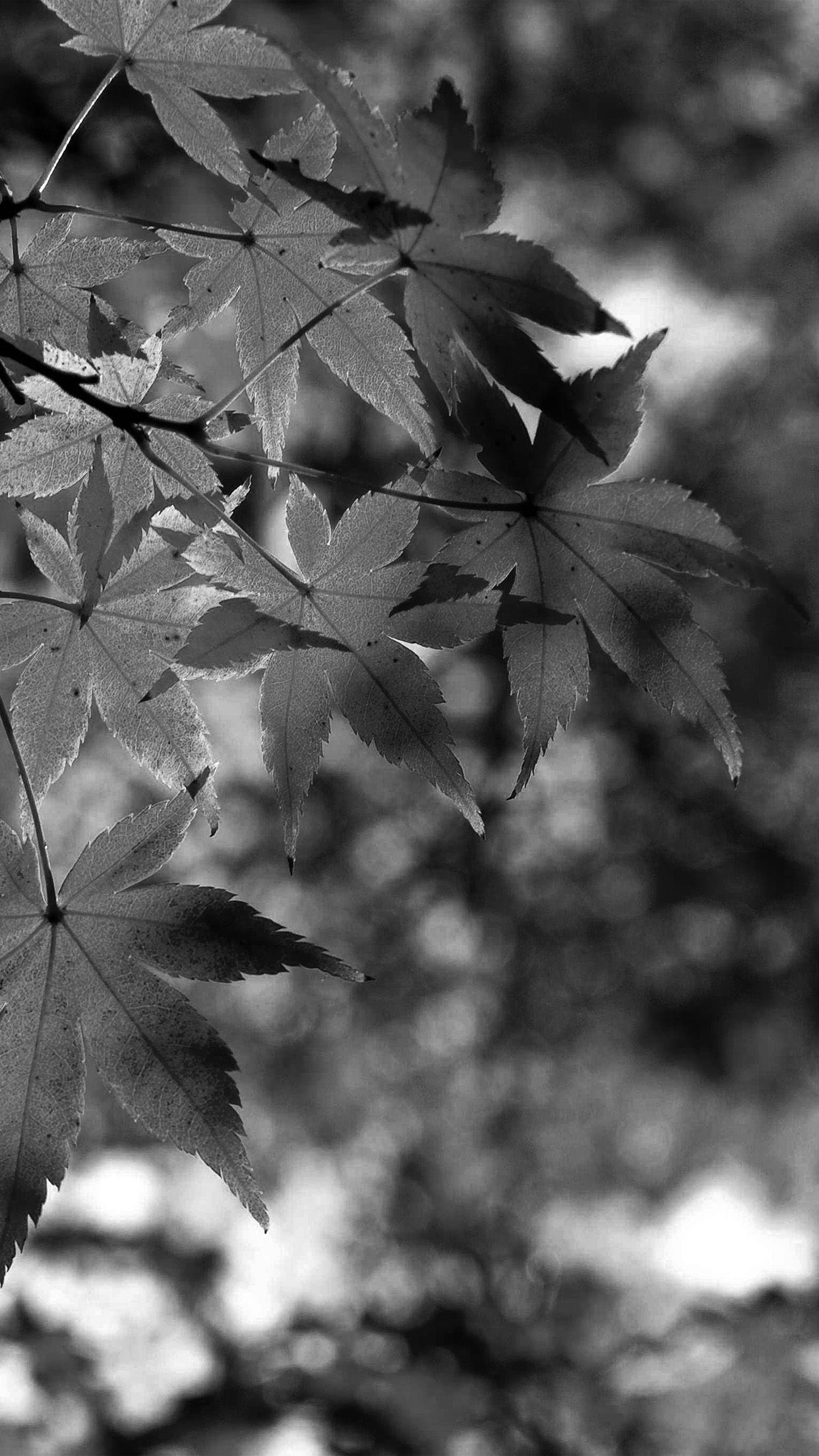 Fall Wallpaper Black 3d Wallpapers Fall Wallpaper Autumn Leaves Wallpaper Android Wallpaper