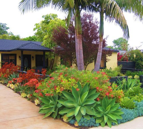 Drought Tolerant Front Yard: Beautiful And Water-smart Landscape Of Agaves, Aloes