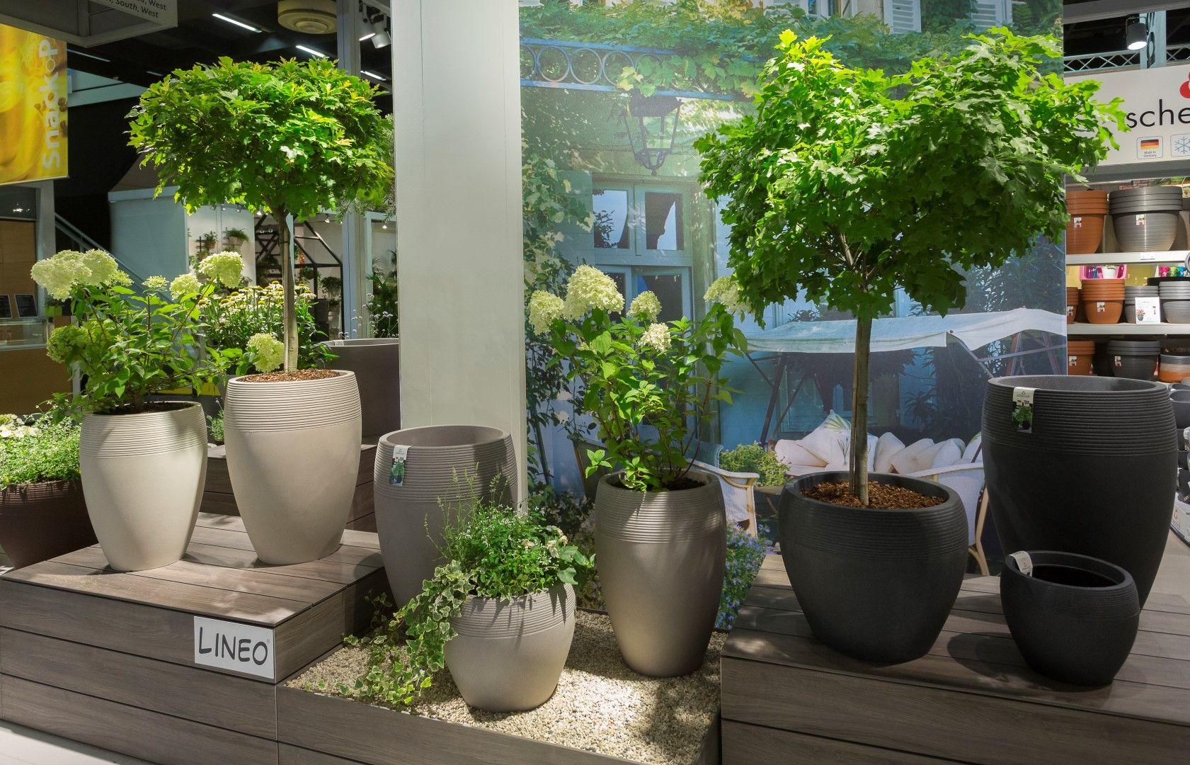 Lineo Von Scheurich Mit Baumchen Pflanzen Garten Outdoor
