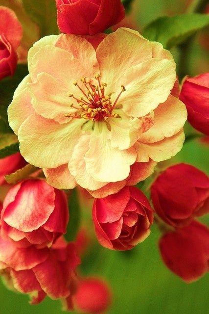 Tipi Di Fiori Rossi.Flowers Fiori Rossi Fiore Di Primavera Bellissimi Fiori