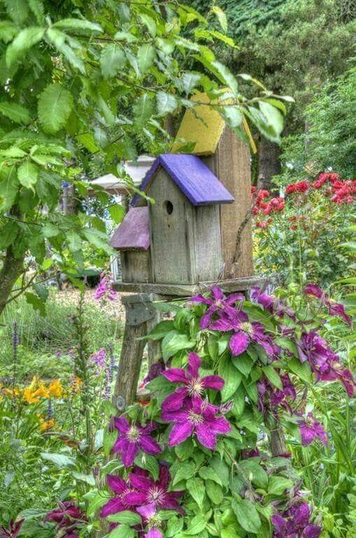 Birdhouse on ladder with clematis