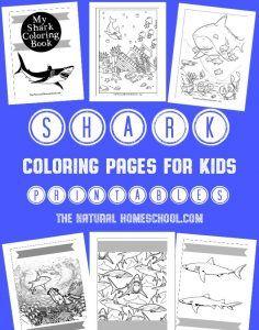 printables archives  the natural homeschool  shark