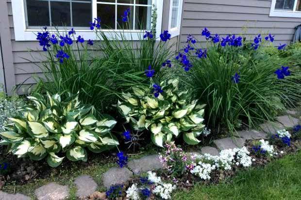 любимый сад огород в контакте