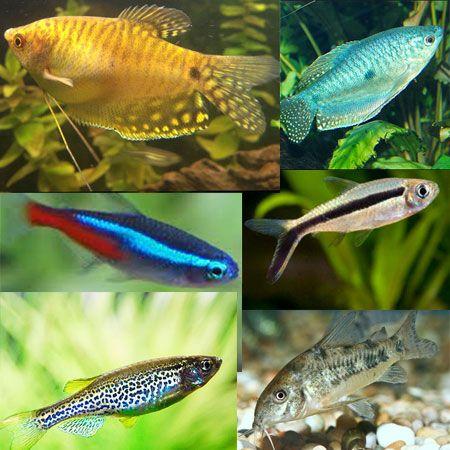 Tropical Tank Filler Pack 12 Tropical Tanks Tropical Fish Tanks Tropical
