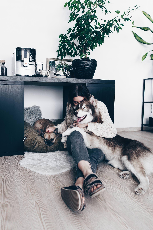 Wildborn Hundefutter Erfahrungen Von Frenchie Mocca Und Husky Teddy Hunde Futter Hundefutter Hunde