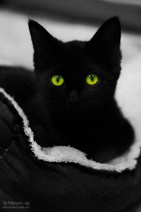 Black Cat Green Eyes Black Blooms Cats Dresses Pinterest