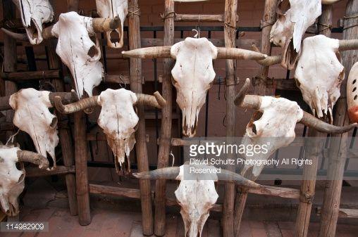 Stock Photo : Skulls of cows