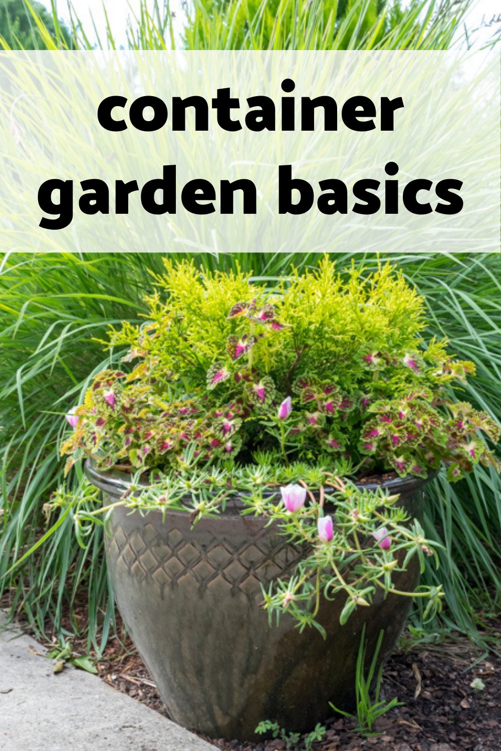 Container Gardening Basics Thrillers Fillers And Spillers