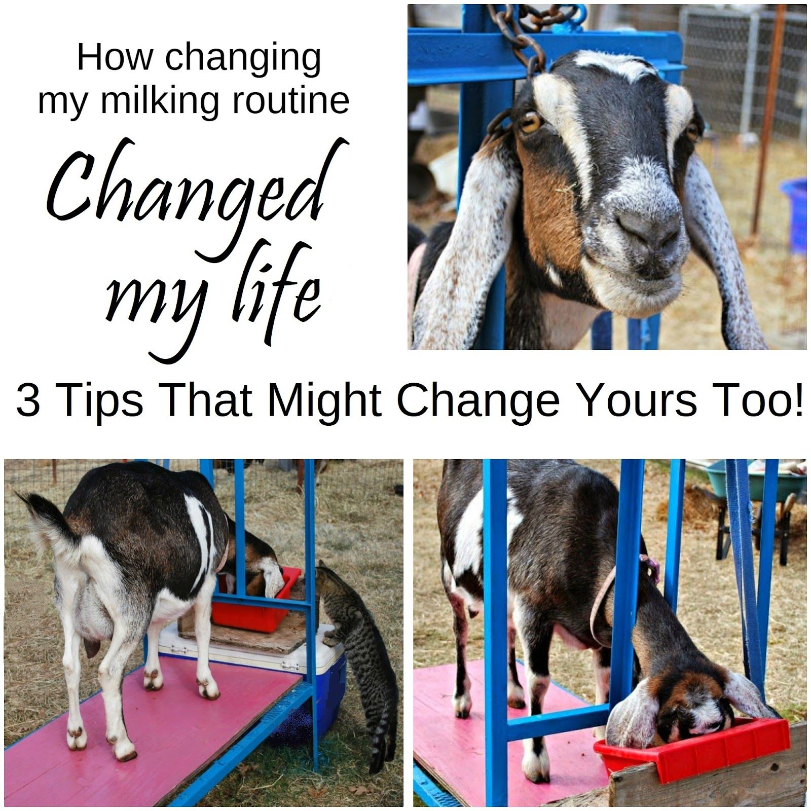 How Changing My Milking Routine Changed My Life