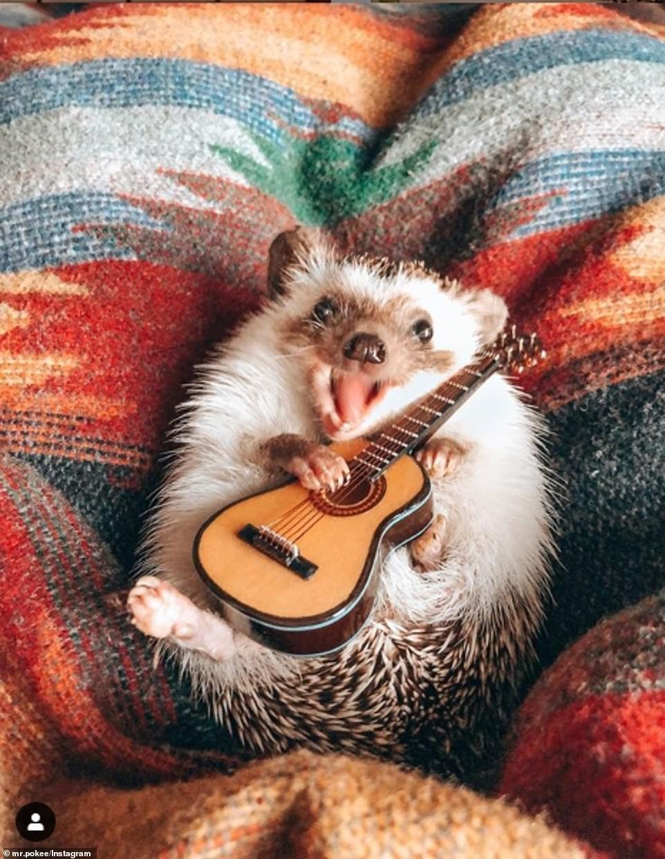 The world happiest hedgehog Herbee