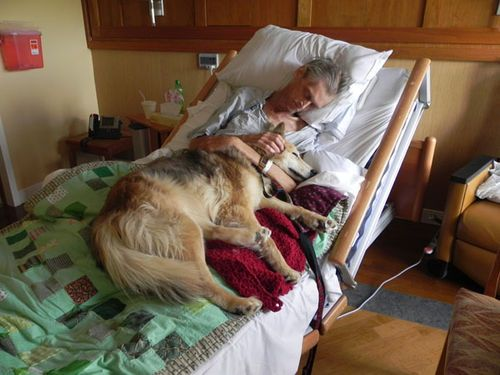 A dying man's last wish: to see his dog • Kevin McClain with companion, Yurt at Hospice House in Cedar Rapids, Iowa • photo: Randy Dircks on KCRG • video: http://www.kcrg.com/news/local/Dying-Mans-Final-Wish-to-be-Reunited-With-Dog-124040304.html