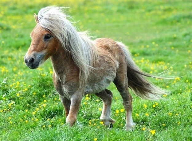 44+ Baby pony ideas in 2021