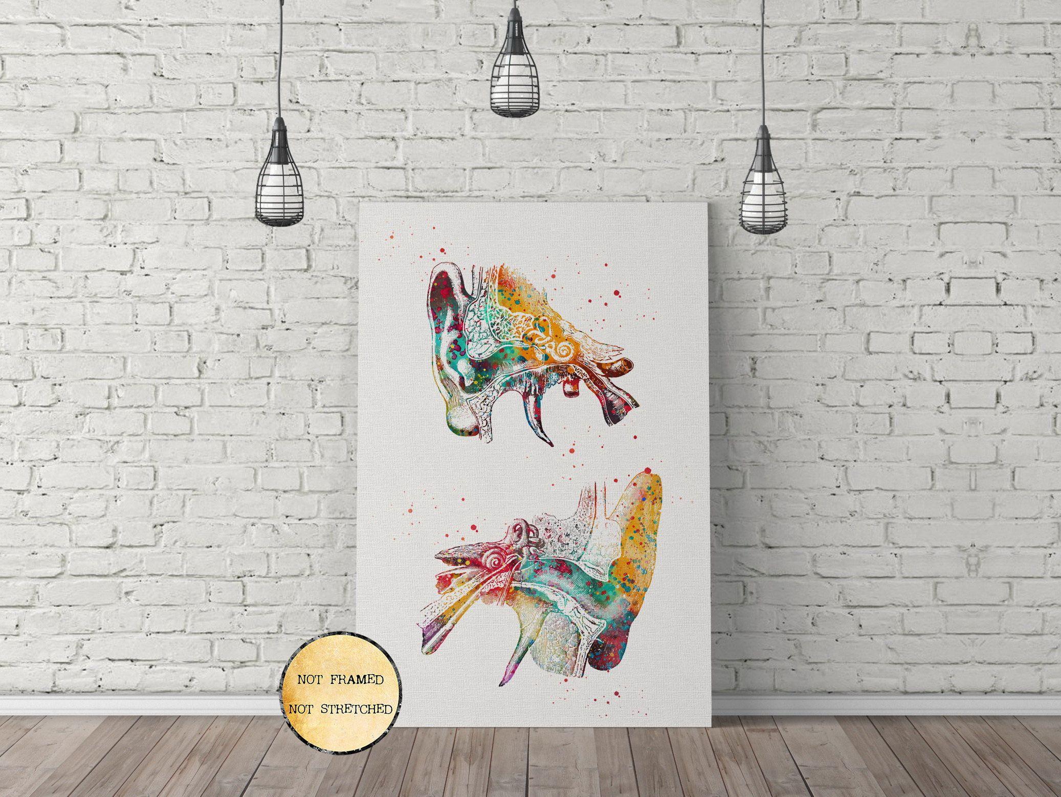 Human Ear Outer Ear Anatomy Watercolor Art Audiology