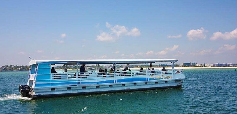 Caribe dolphin cruise 9809039 boat rental dolphin