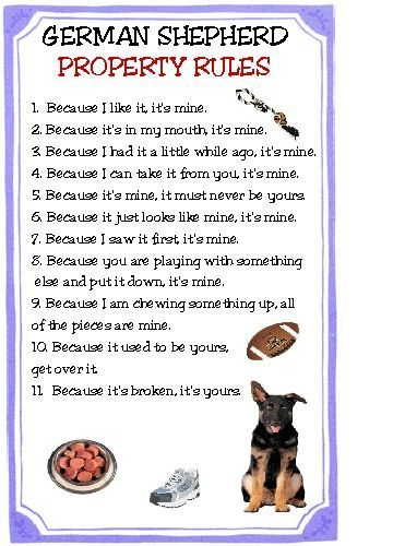 Funny Dog Akita House Rules Refrigerator Magnet Gift Card Insert