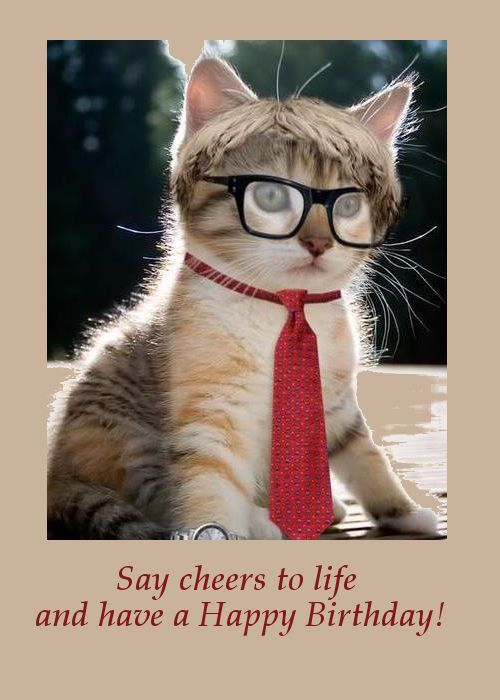 Say Cheers To Life And Have A Happy Birthday Pets Cute Animals