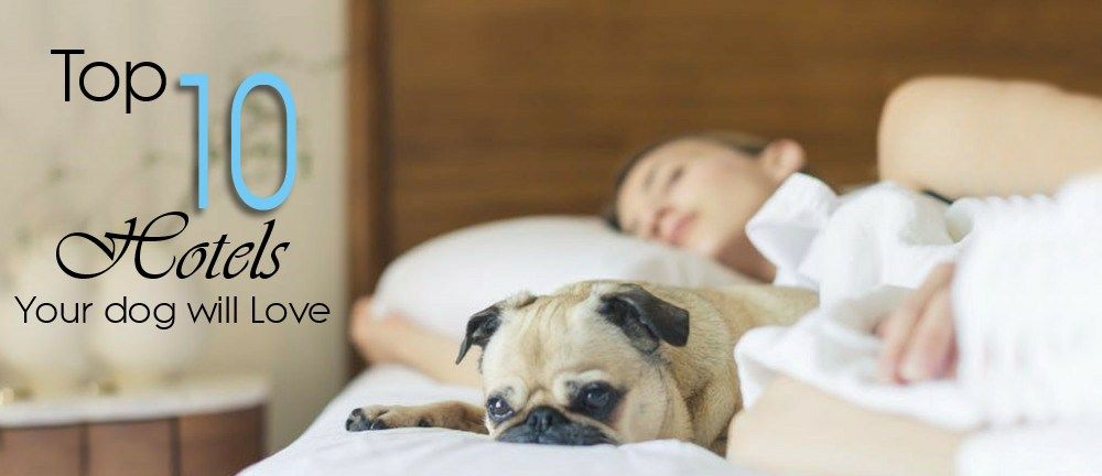 Top 10 Luxury Pet Friendly Hotels In The Usa Pet Friendly Hotels